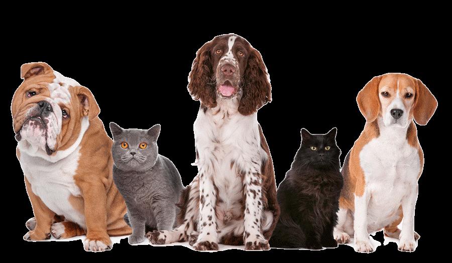 Картинки с породами собак и кошек